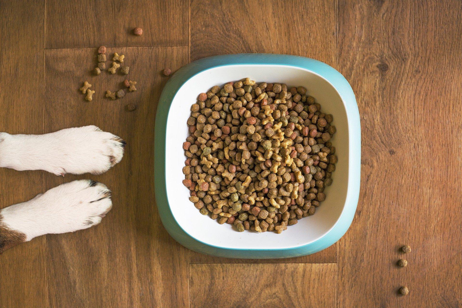 O que cachorro come? Ração!