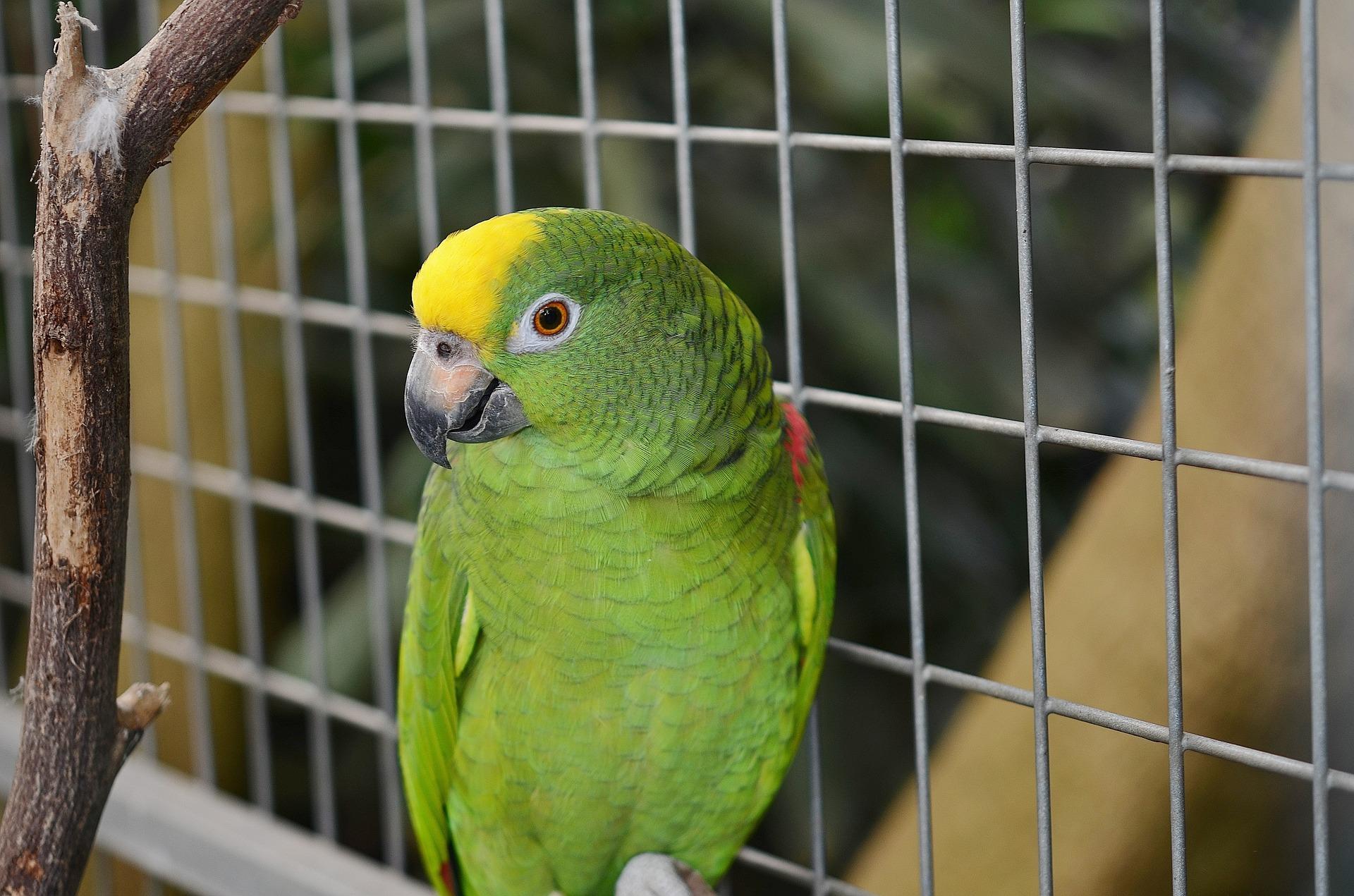 acessórios para gaiola de aves
