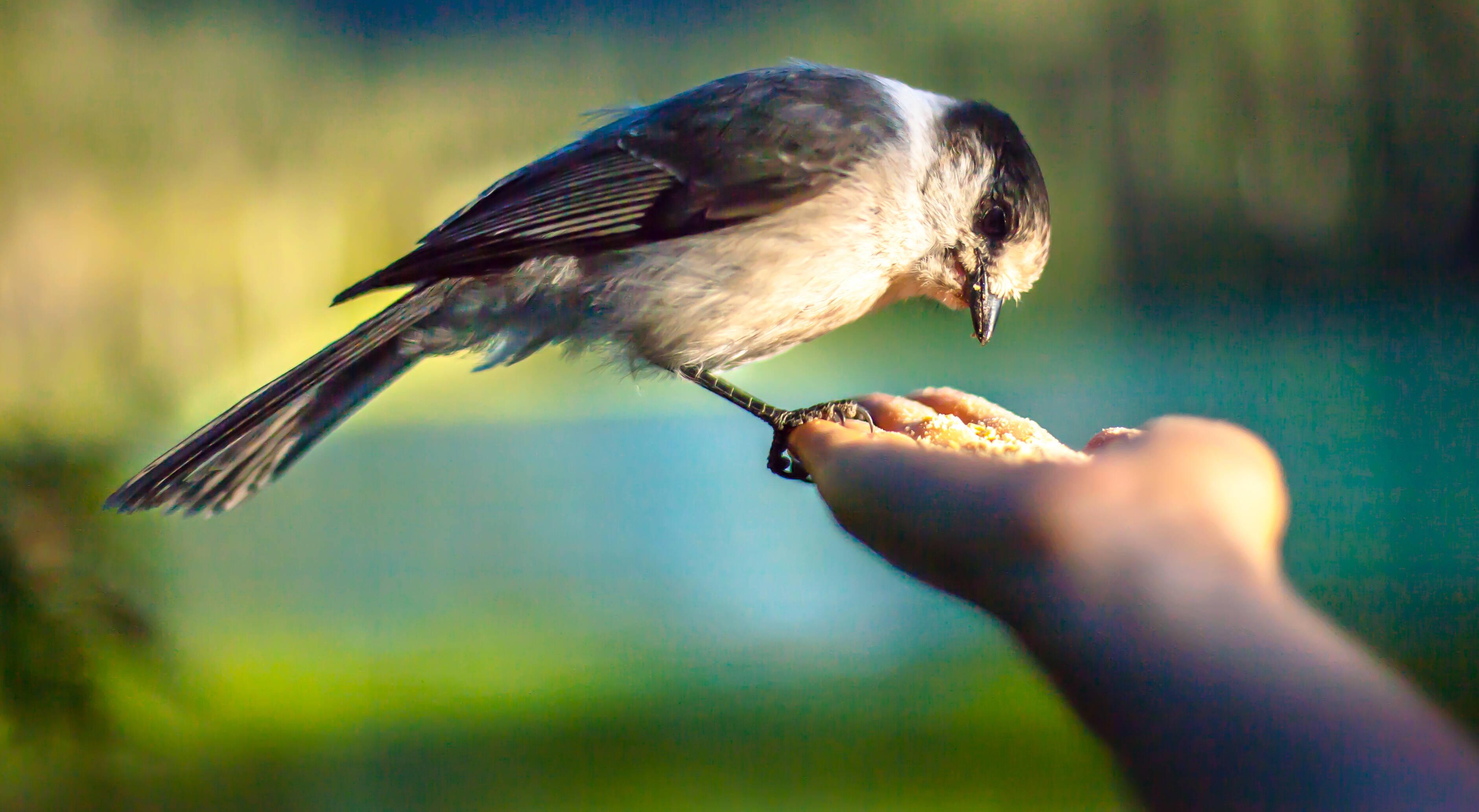 pássaro comendo ração extrusada