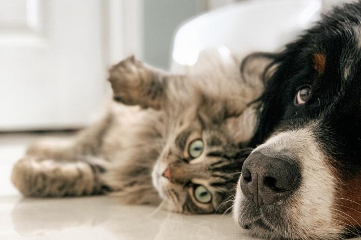 relação de cachorro e gato em casa
