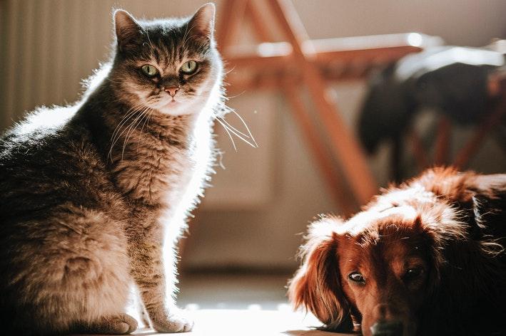 cachorro e gato juntos na sala