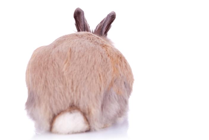 coelho de costas porque não comprar coelhos