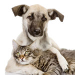 cachorro-gato-adocao-de-animais-blog-cobasi