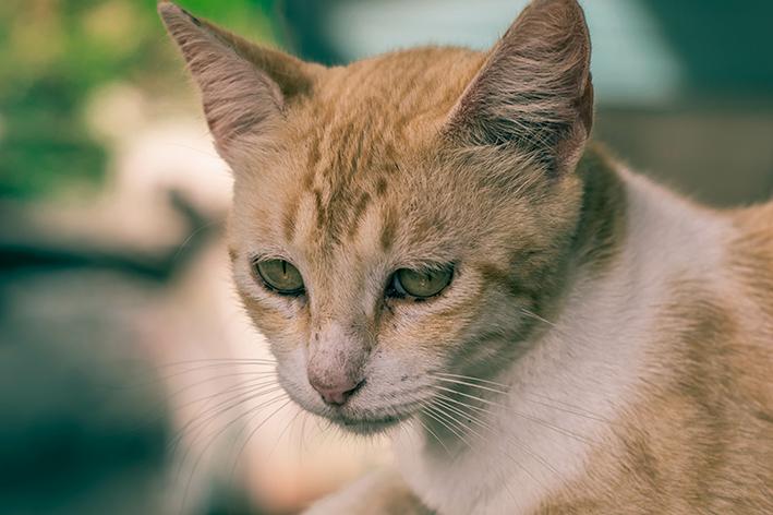 ansiedade-de-separacao-gato