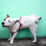 cachorro-fazendo-xixi-blog-cobasi