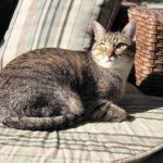 adocao-de-gatos-blog-cobasi