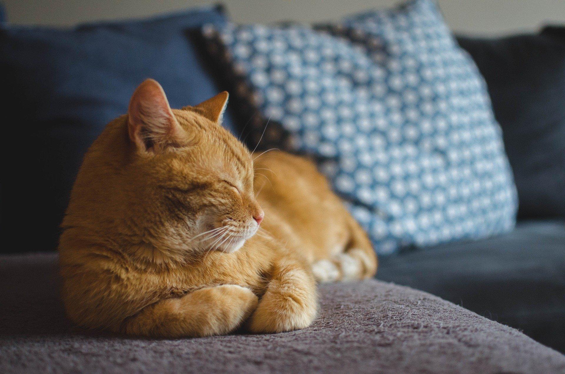 Dicas para ajudar na adaptação do gato