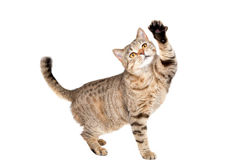 adestramento-de-gatos-blog