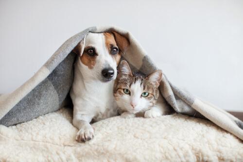 cachorro e gato com cobertor