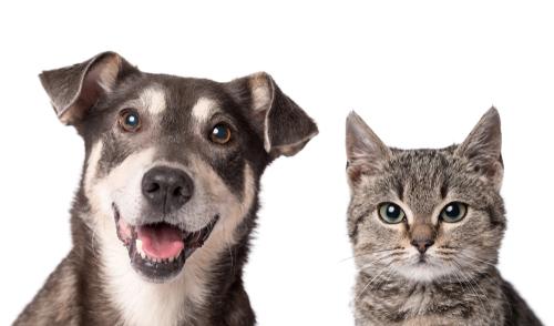 cachorro e gato no fundo branco