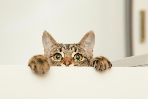 Gatinha escondido
