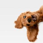 Cachorro filhote