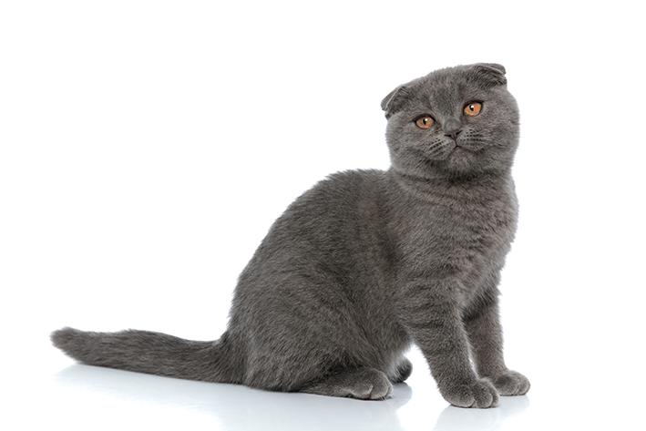 Nomes para gatos cinzas