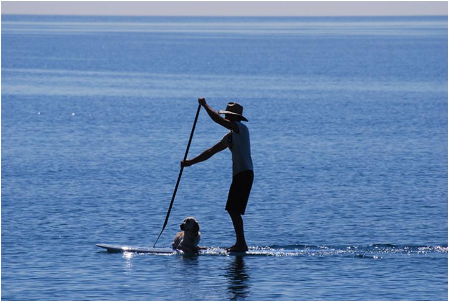 Cachorro pode entrar no mar e acompanhar no stand up paddle