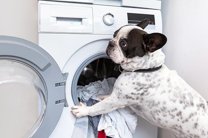 Cachorro na frente de máquina de lavar