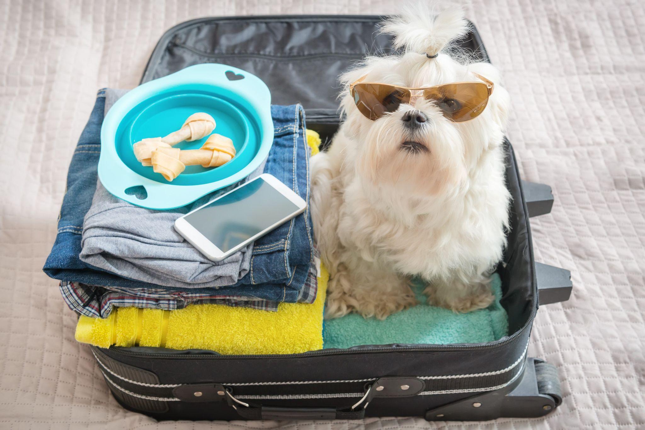 cachorro dentro de mala