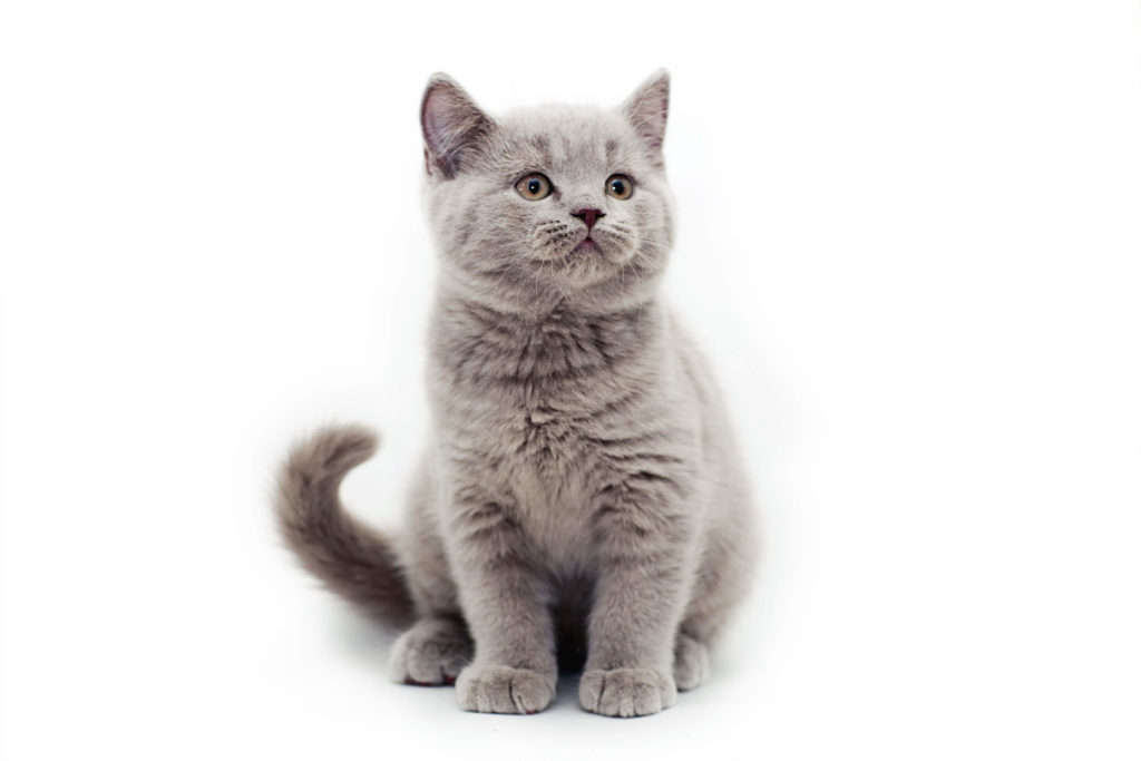 bola-de-pelos-em-gatos