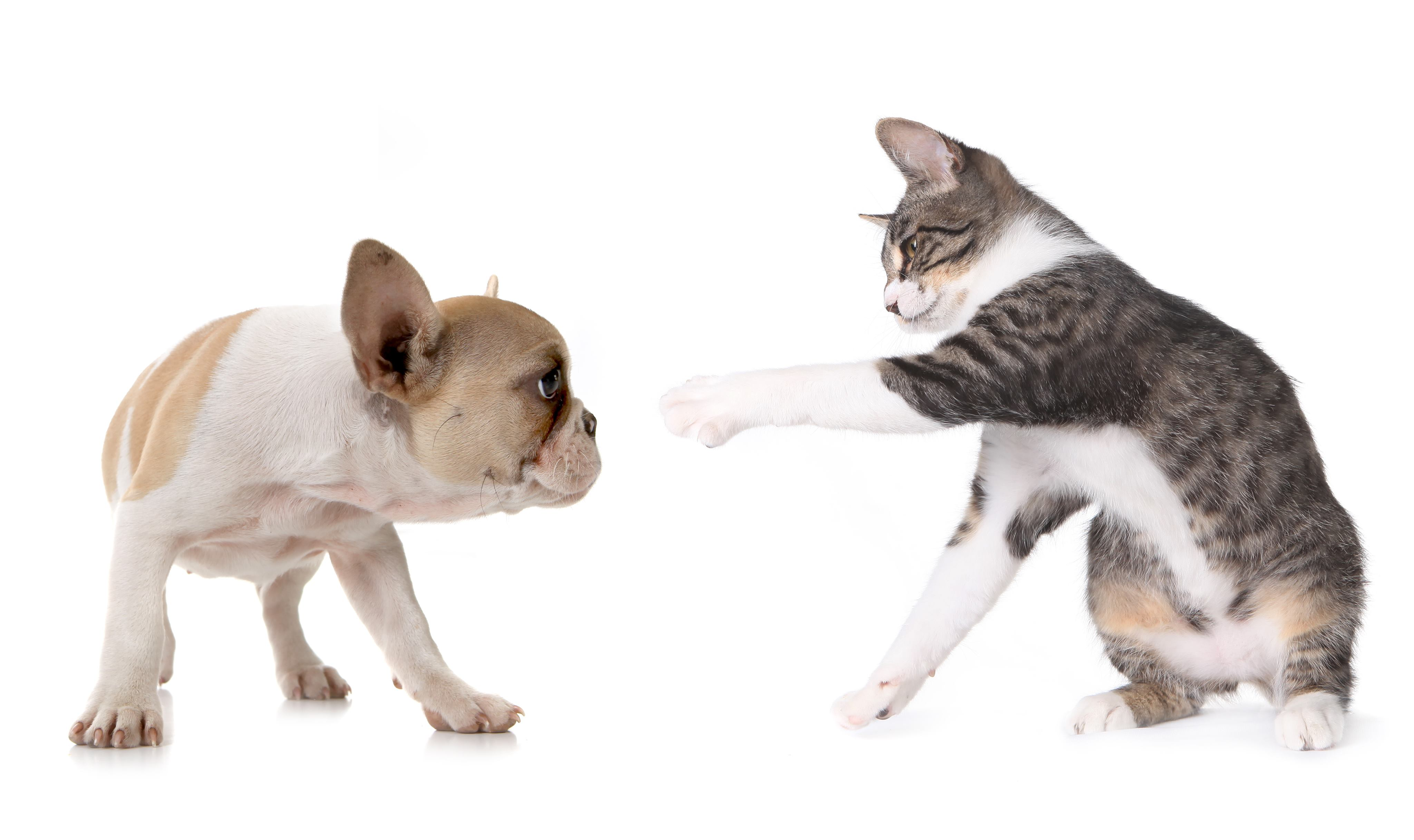 por-que-gatos-arranham