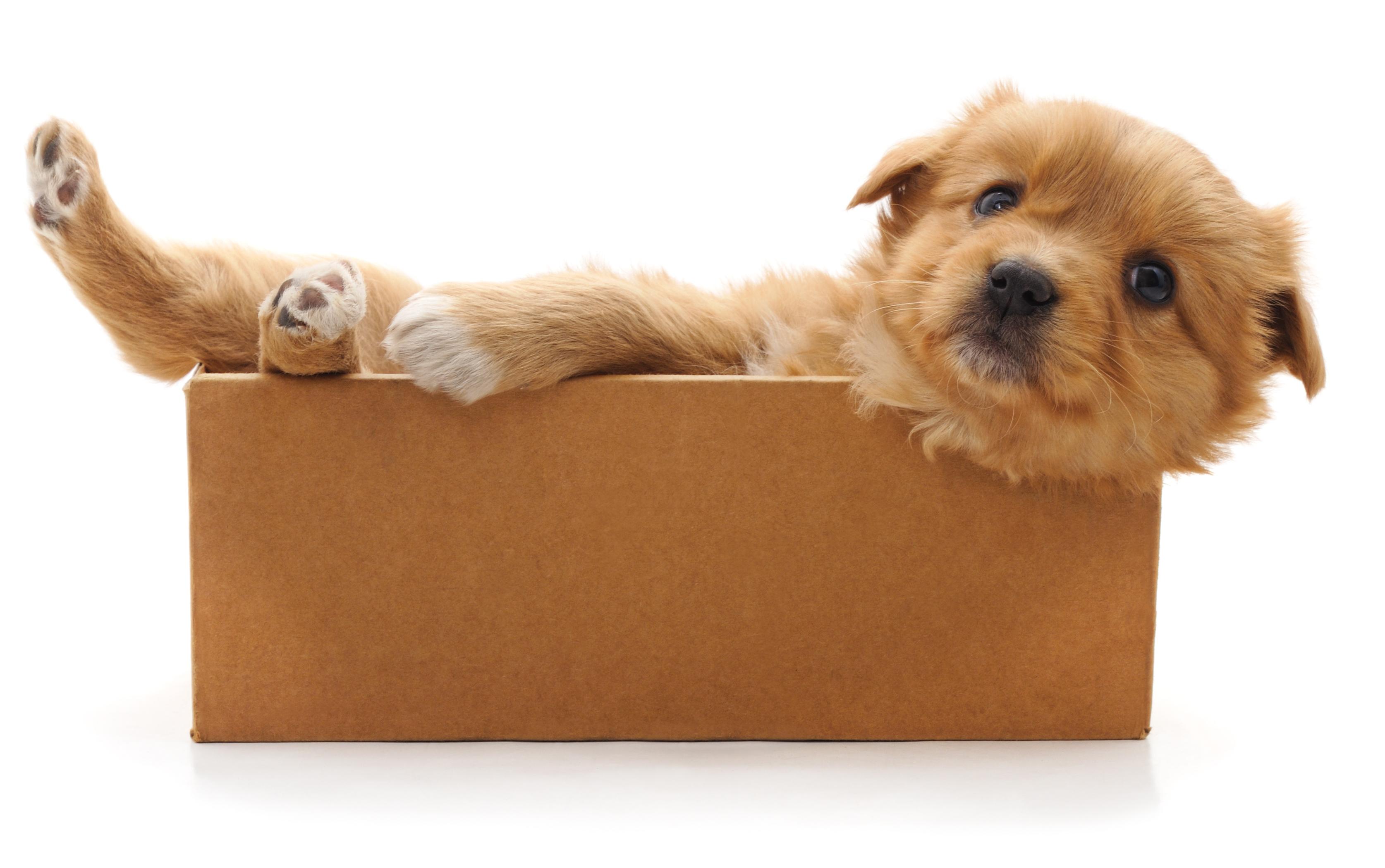 filhote-de-cachorro-blog-cobasi