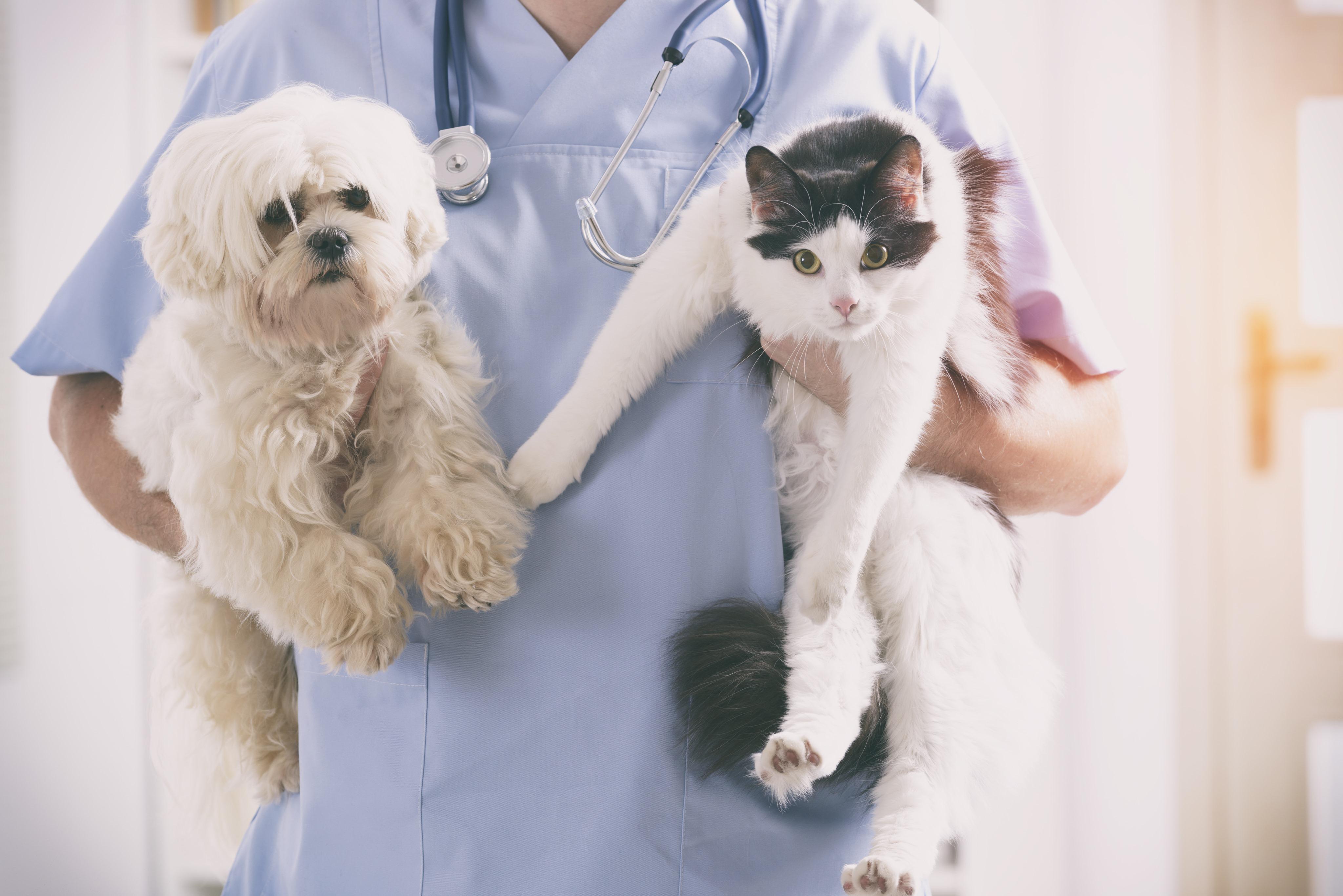 pets-no-veterinario