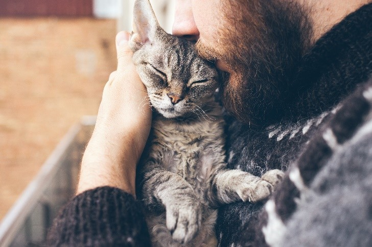gato-ronronando-blog-cobasi