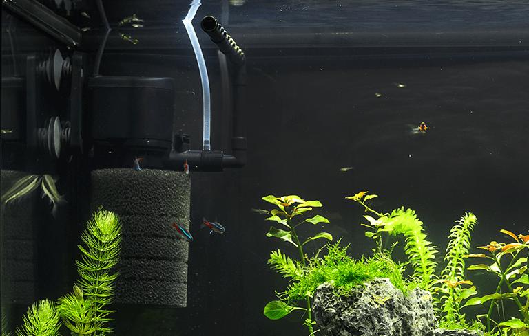 Mídia biológica para aquário