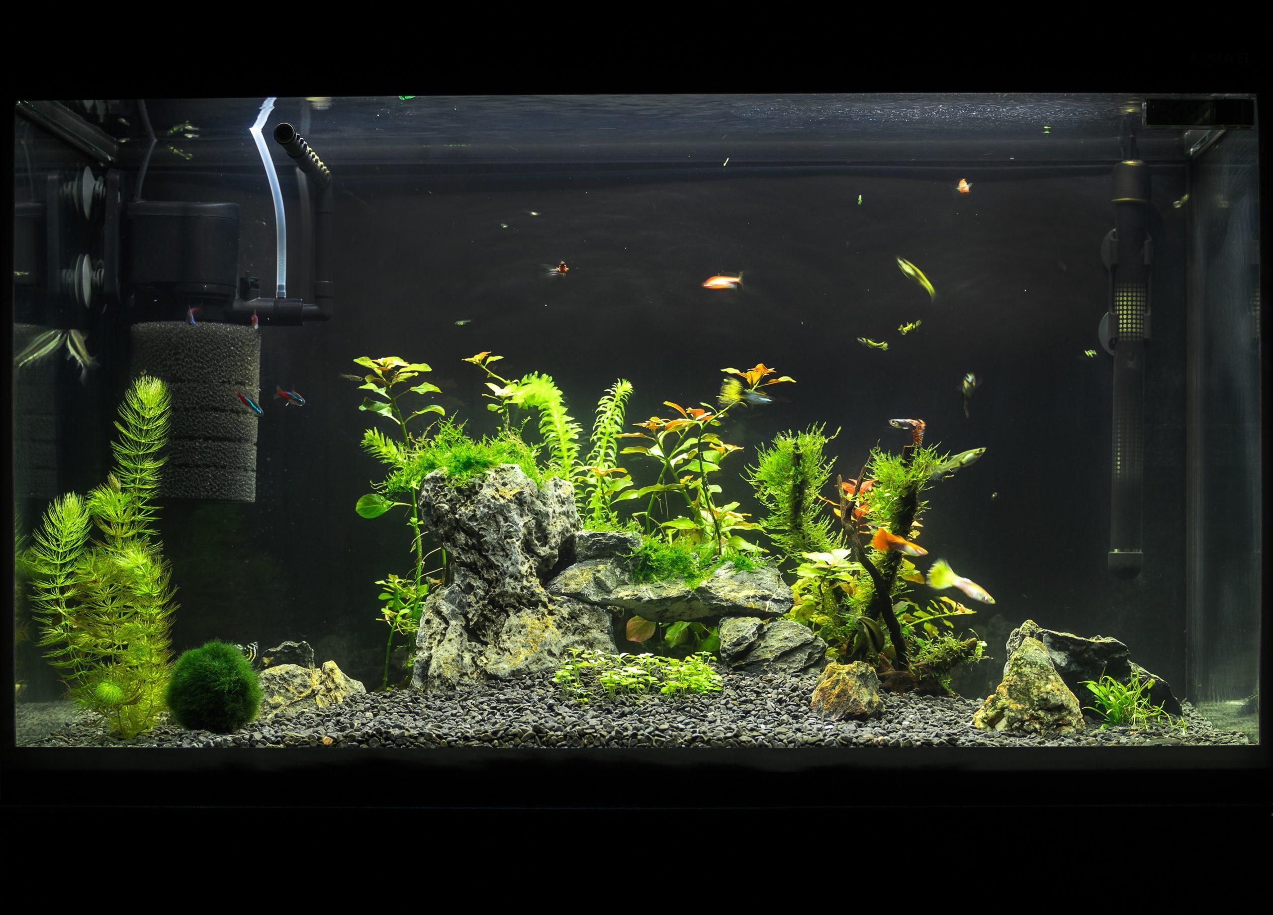 filtro-para-aquario-blog-cobasi