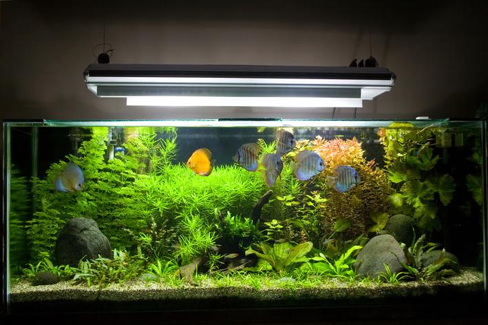lâmpada para aquário