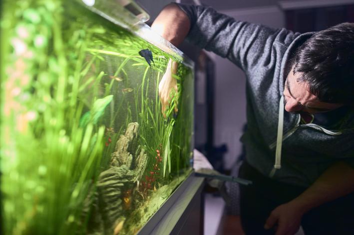 Homem faz teste de aquário para pH