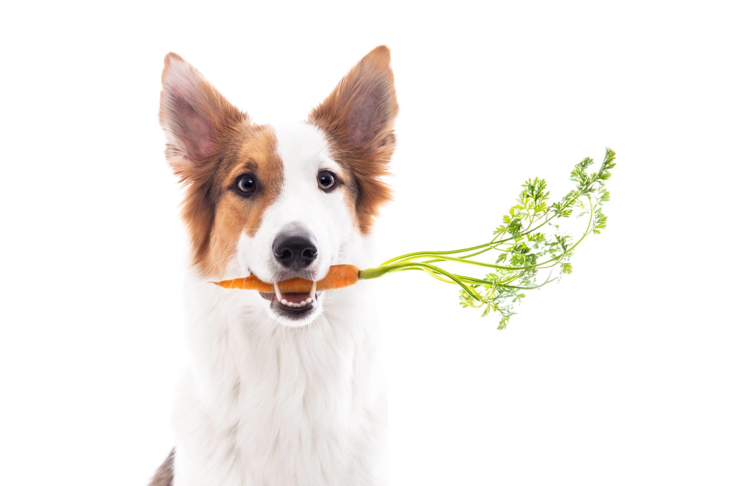 Cenoura é um petisco natural para cachorro