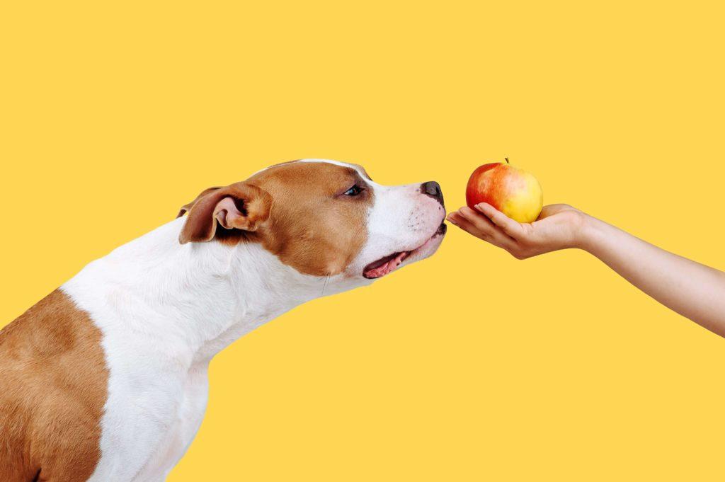 cachorro cheira maça