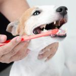 cachorro escovando os dentes para evitar o tártaro