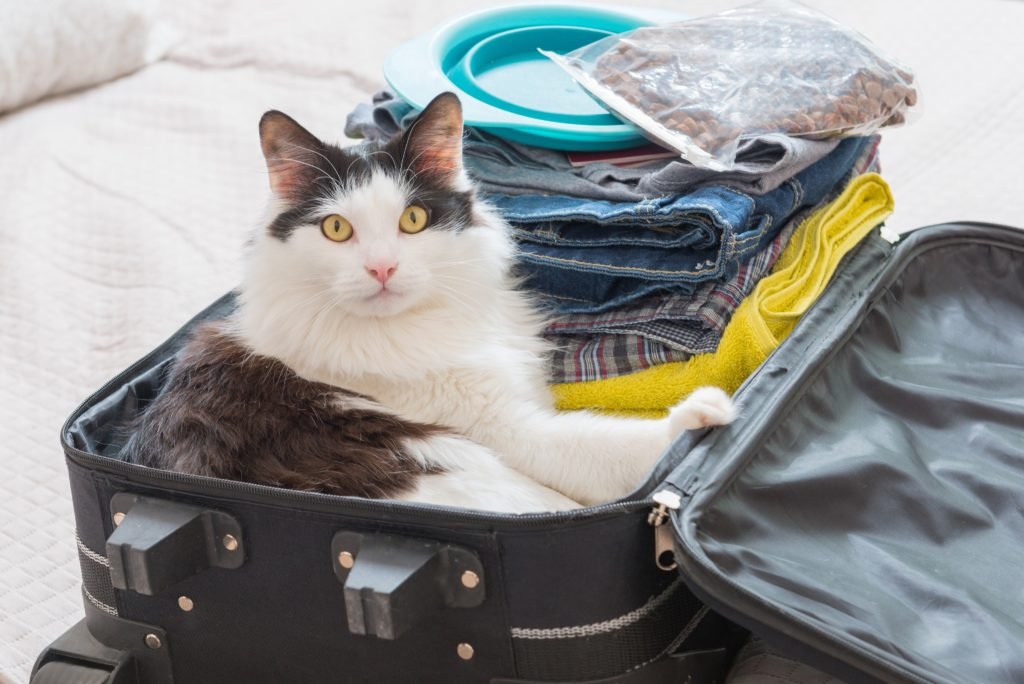 Viajar com gato