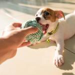 Filhote brinca com bolinha para cachorro