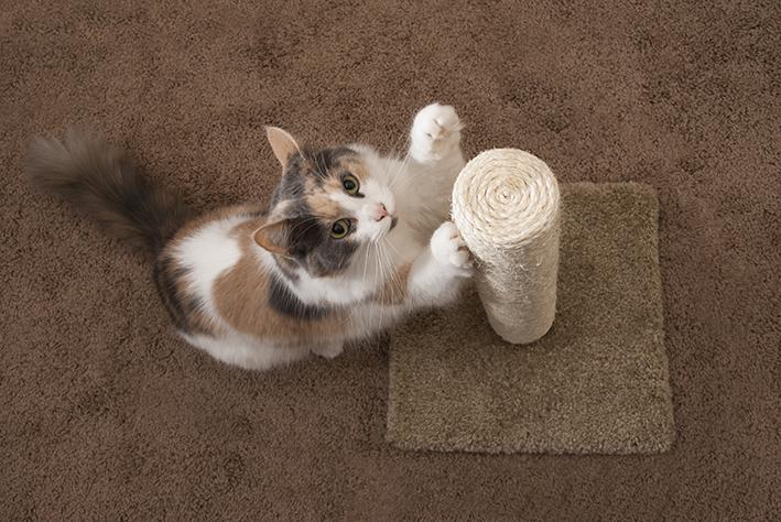 gato usa arranhador com catnip