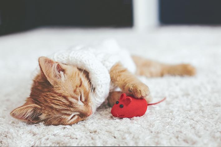 gato com rato de brinquedo