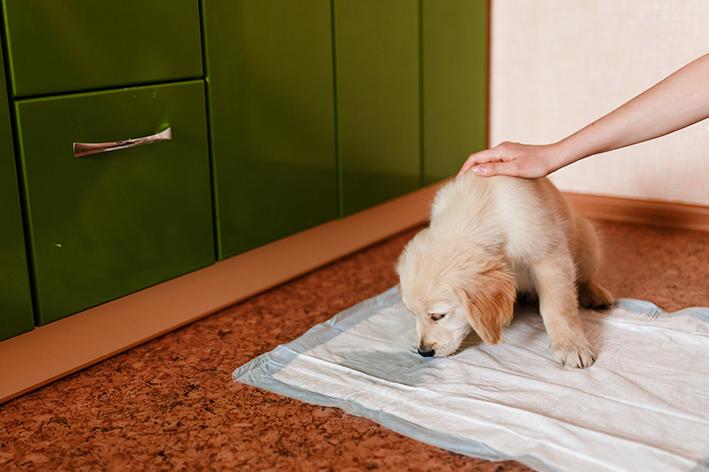 filhote faz xixi no tapete higiênico
