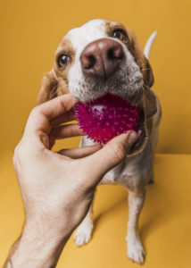 Cão brinca com bolinha