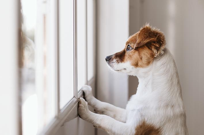 Cachorro na janela triste
