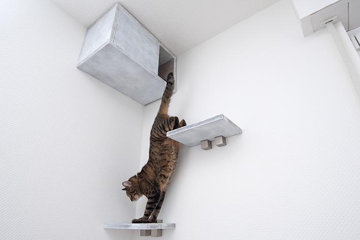 Gato salta de uma prateleira para outra