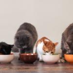 Ração para gatos no potinho com 4 gatos