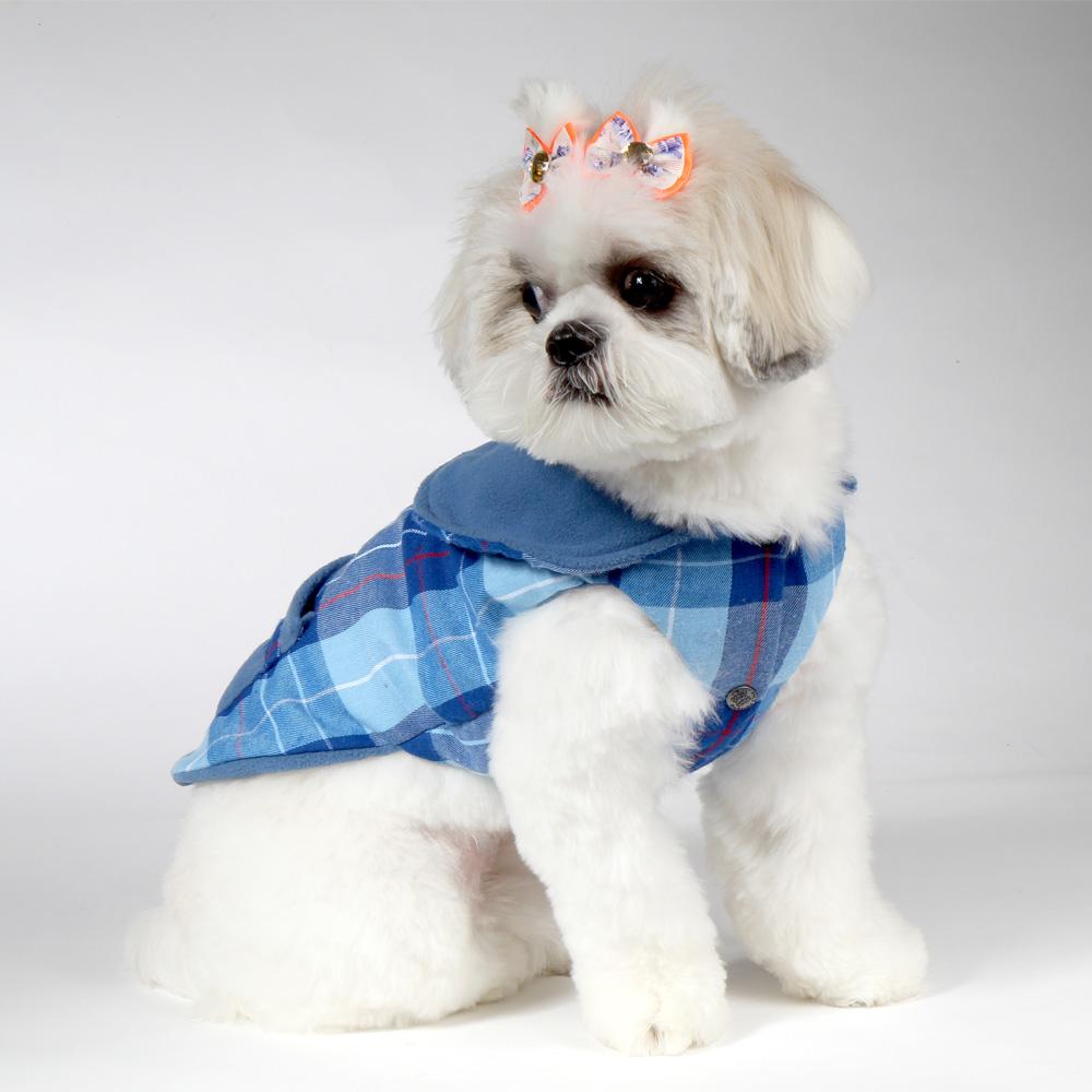 Cachorro com roupinha de frio