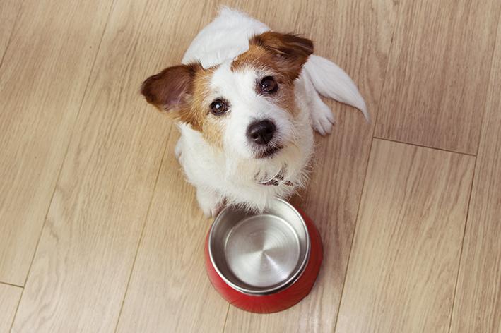 Cachorro com potinho de ração vazio