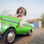 Cachorro dentro de carro