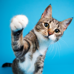 Aprenda tudo sobre gato