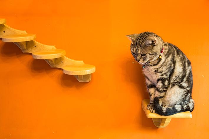 Gato em um fundo laranja