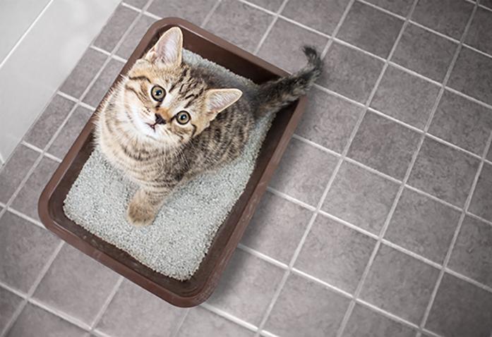 Filhote de gato na caixa de areia olhando para cima