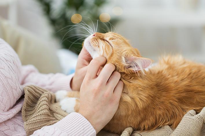 tutora fazendo carinho em um gato