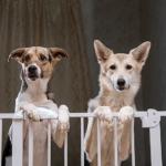 cercado para cachorros