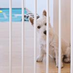 Cachorro sozinho com cercado